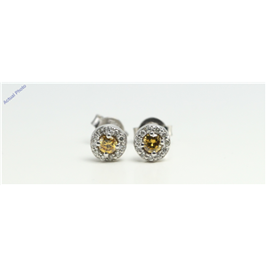 14k White Round claw set butterfly post earring with diamond set bezel (0.28ct, Yellow(Treated), VS2)